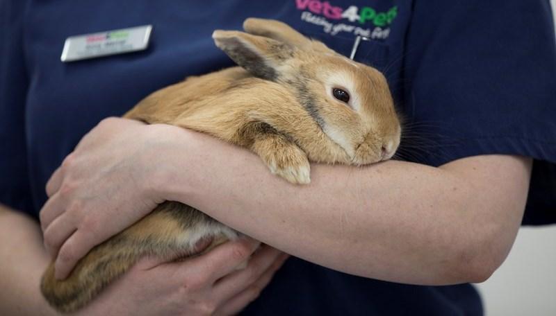 Блохи у декоративных кроликов - главное фото