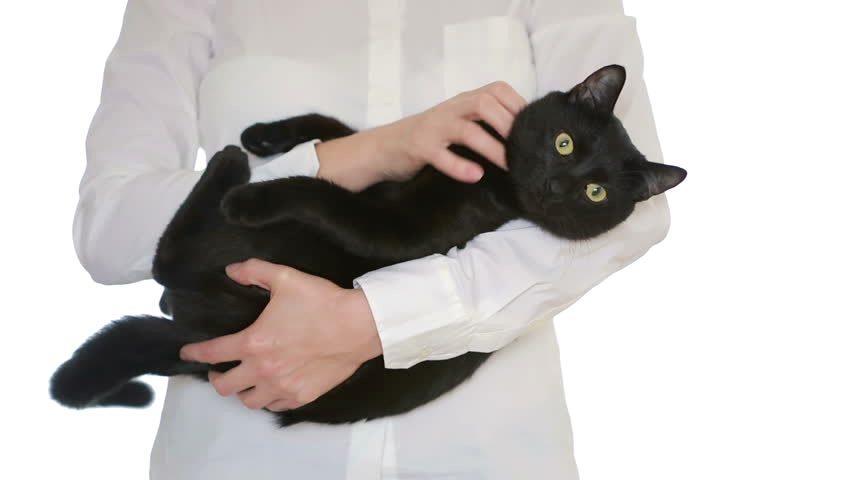 Болячки на голове у кота - заразность