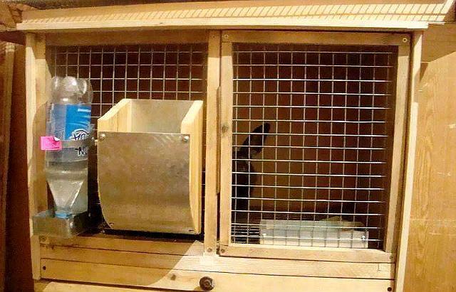 Бункерная кормушка для кролика