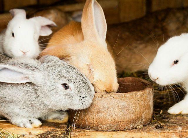 Чашечная кормушка для кроликов