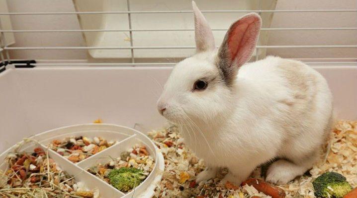 Подбор рациона для кролика