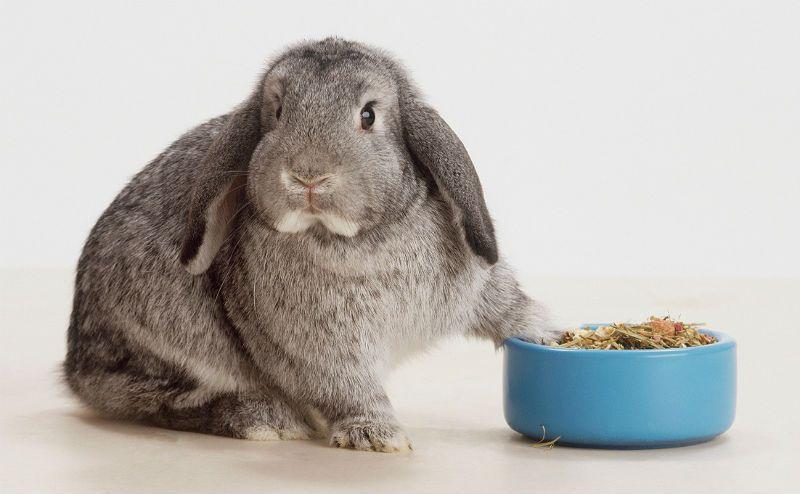 Чем кормить декоративных кроликов - грубые корма