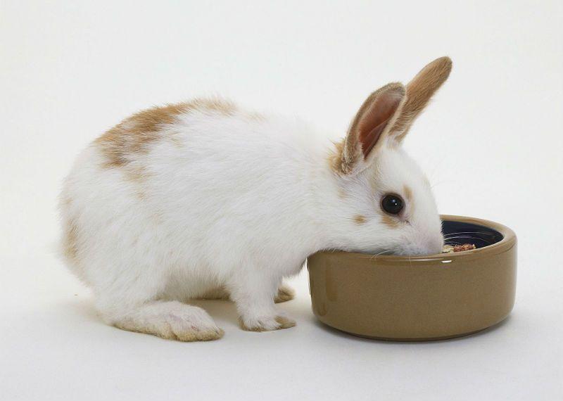 Чем кормить декоративных кроликов - минеральные добавки