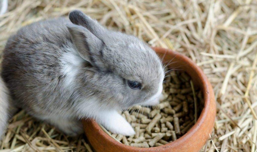 Рацион декоративного кролика