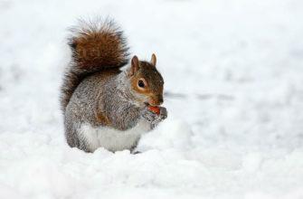 Что белки запасают на зиму - главное фото