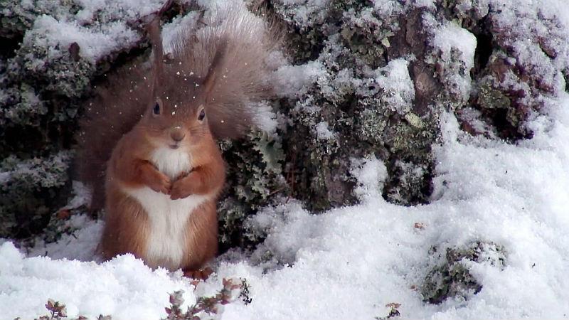 Тайник белки на зиму