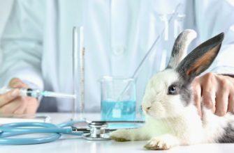 Геморрагическая болезнь у домашних кроликов