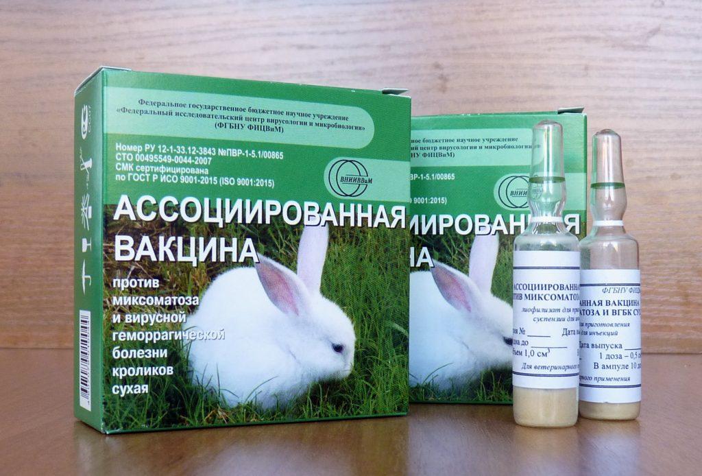 Геморрагическая болезнь у домашних кроликов - вакцинация