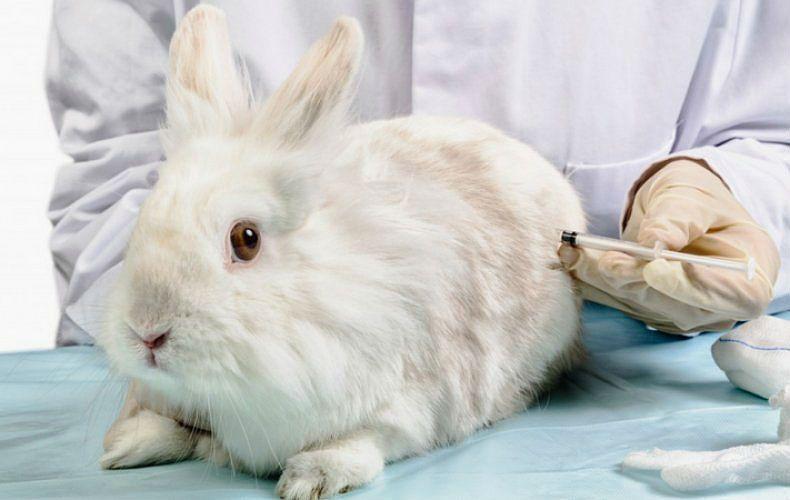лечение ВГБК у кроликов