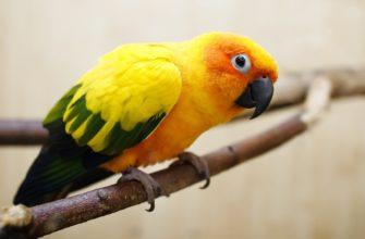 Интересные факты о попугаях - главное фото