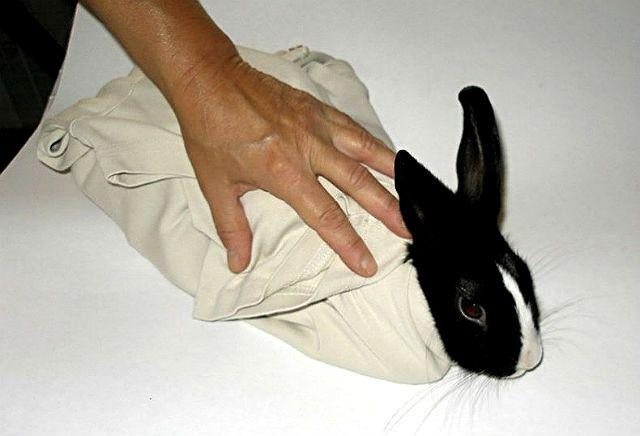 Как фиксировать кроликов полотенцем