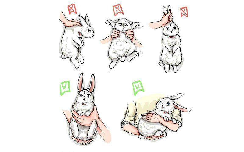 Как правильно держать кролика