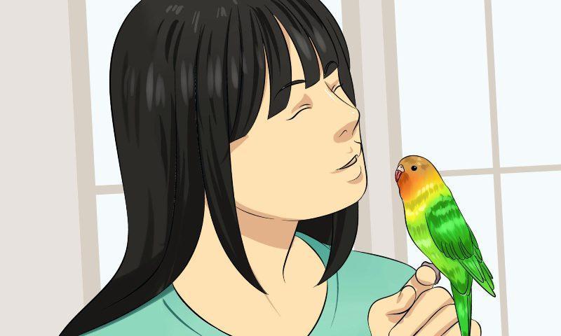 Как научить неразлучника разговаривать