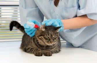 Капли при ушном клеще у кошек - главное фото