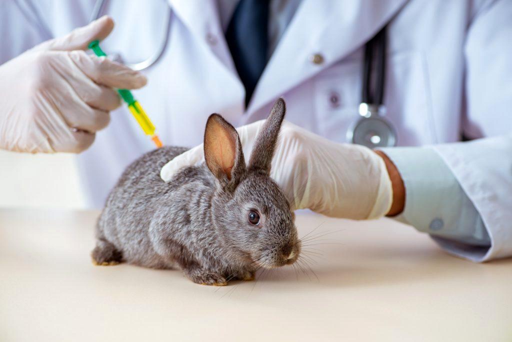 Кокцидиоз у кроликов - главное фото