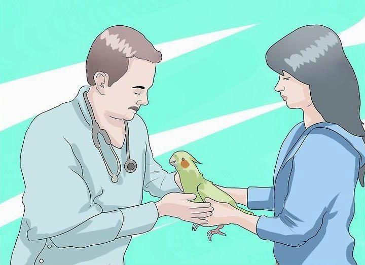 Чихание у попугая корелла