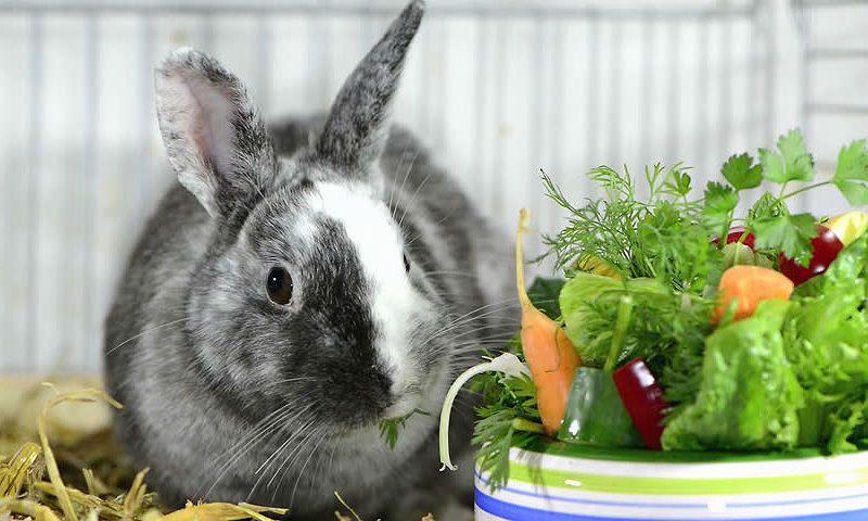 Кормление кроликов для набора веса - главное фото