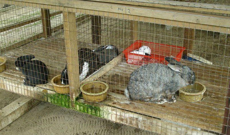 Кормление кроликов для набора веса - продукты