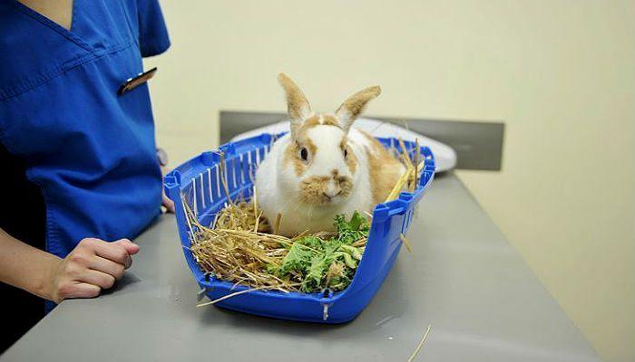Обычный способ откармливания кроликов