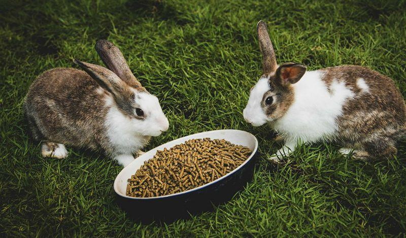 Комбикорм для откорма кроликов
