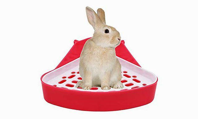 Красная моча у кроликов - главное фото