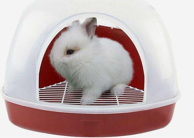 Красная моча у кроликов - стресс