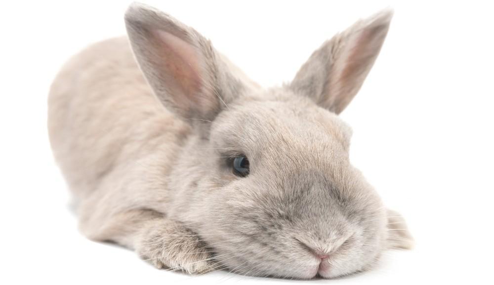 Кролик отказывается от еды - стресс