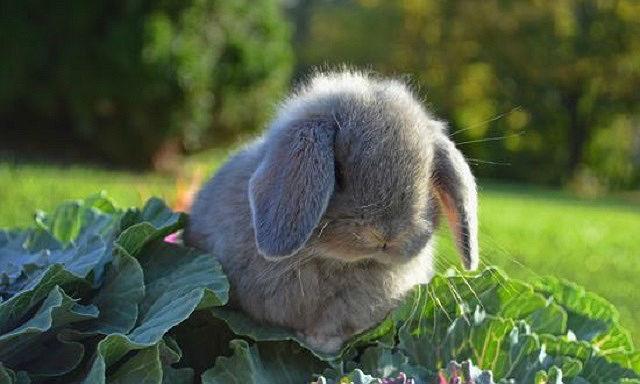 Кролик отказывается от еды - заболевания зубов