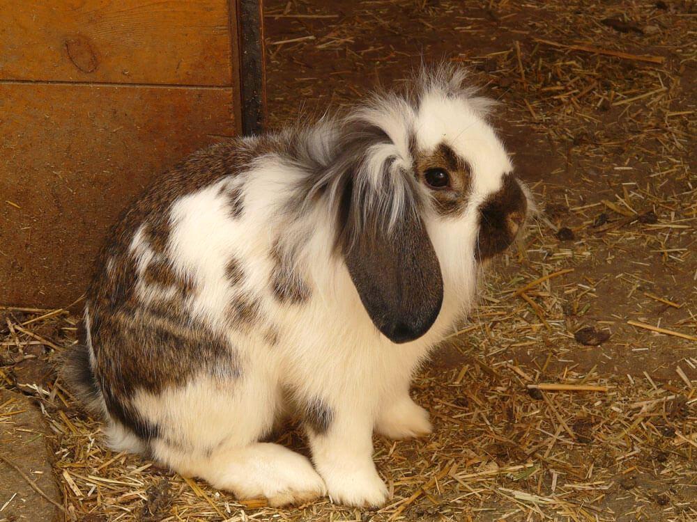 Кролик отказывается от еды - катар желудка
