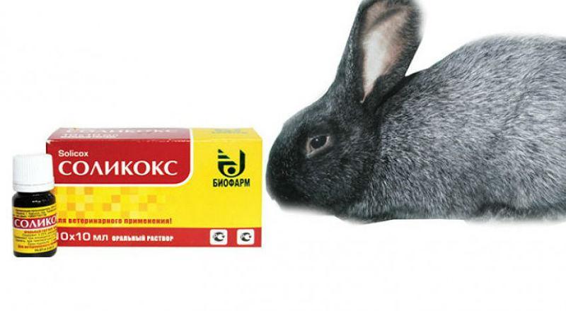 Соликокс для кроликов
