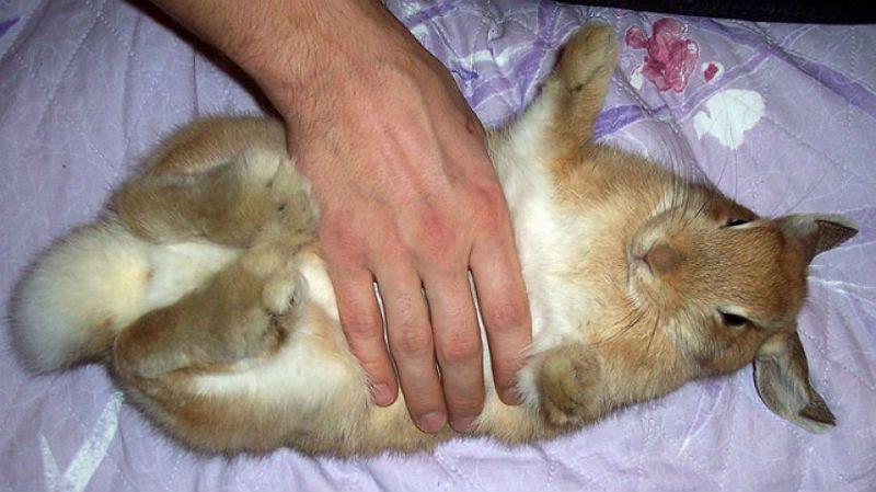 Массаж живота кролику