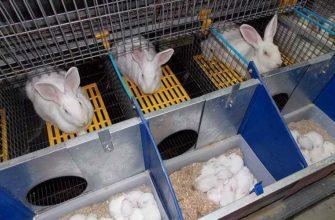 Маточник для крольчат - главное фото
