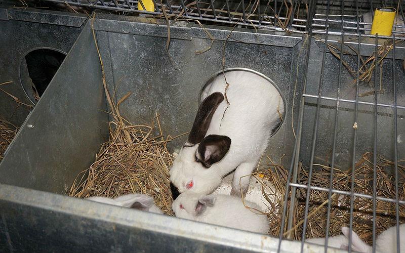 Маточник для крольчат - устройство