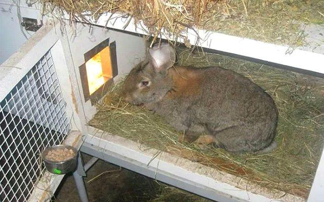 Маточники для кроликов - требования