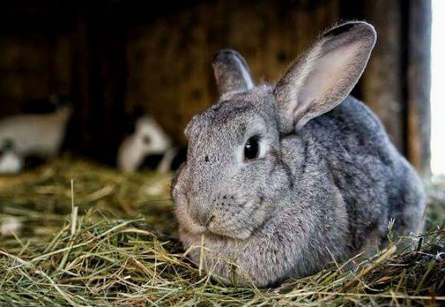 Маточники для кроликов - утепление