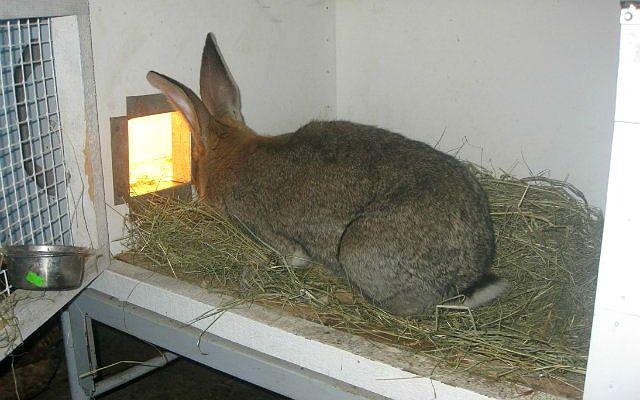 Маточники для кроликов - обогрев