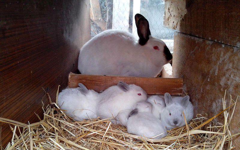 Маточники для кроликов - как обустроить