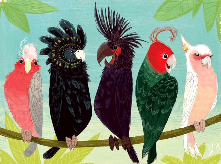 Попугаи какаду - виды