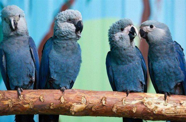 Синий попугай ара - главное фото