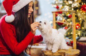 меню на новый год для собак