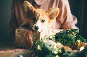 новый год каникулы опасны для собак