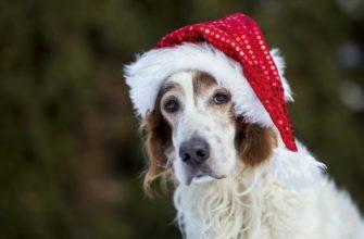 новый год опасен для собак