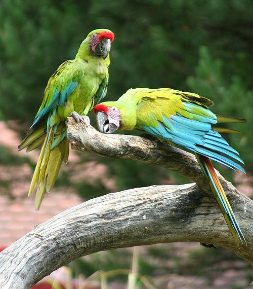 Солдатские ара