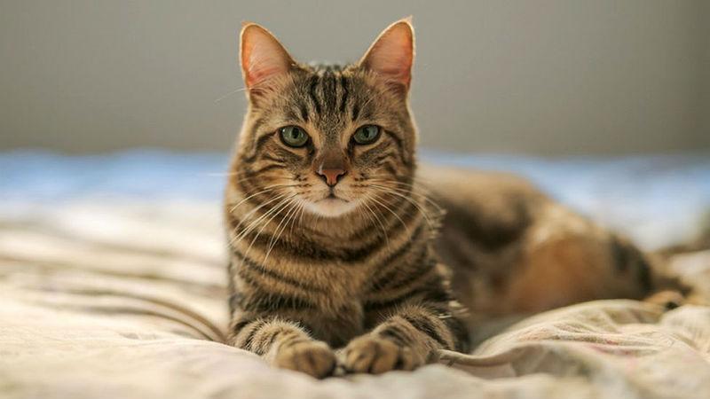 У кота на голове болячки - главное фото