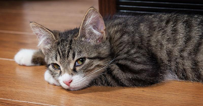 У котенка слезятся глаза - главное фото