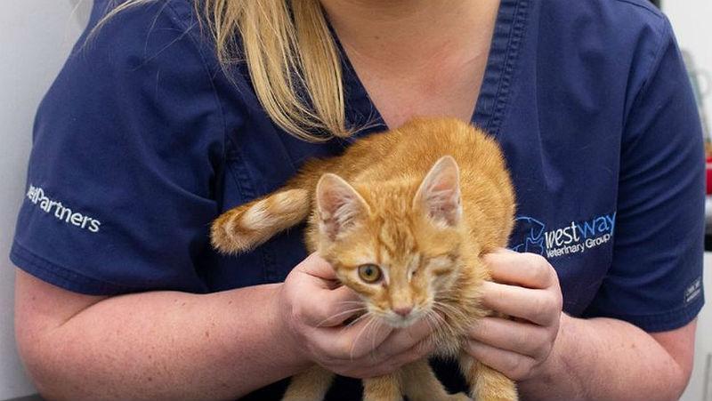 У котенка слезятся глаза - помощь ветеринара
