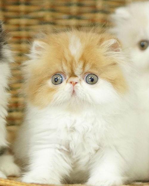У котенка слезятся глаза - анатомия