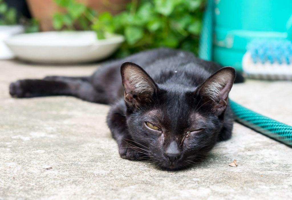 У котенка слезятся глаза (4)