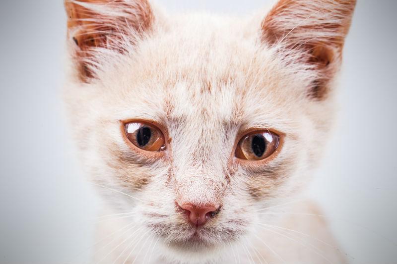 У котенка слезятся глаза - заболевания