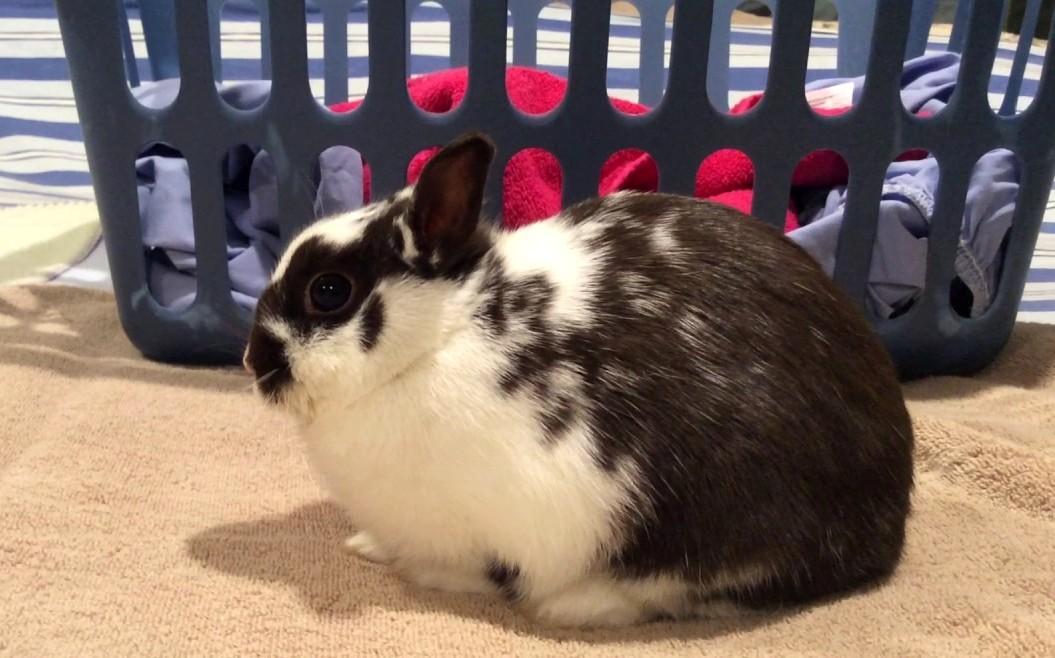 У кролика паралич задних лап